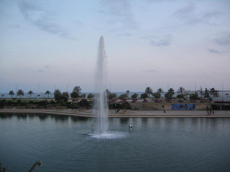Palma 5