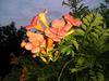 Колдовские цветы